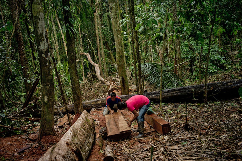 massive deforestation