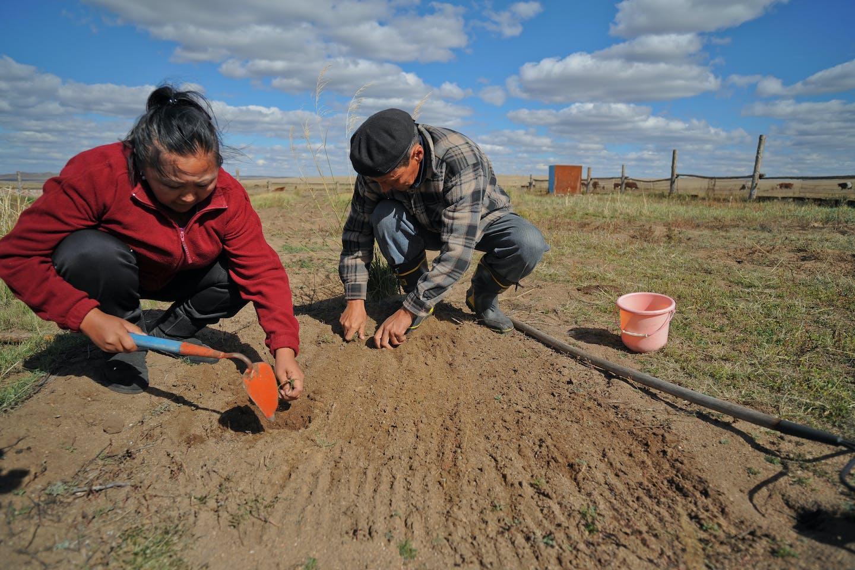 adb mongolian farmers