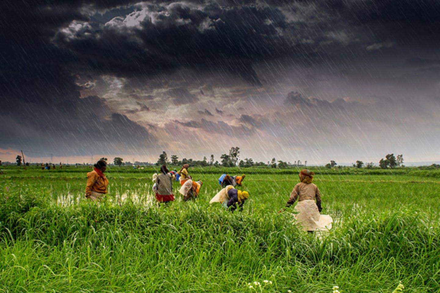 Farming under the monsoon rains in India