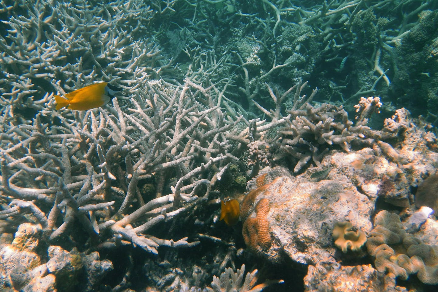 agincourt reef queensland