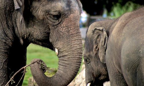 A better way forward for elephant tourism in Thailand