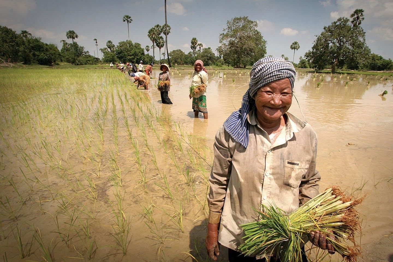 women in the rice field