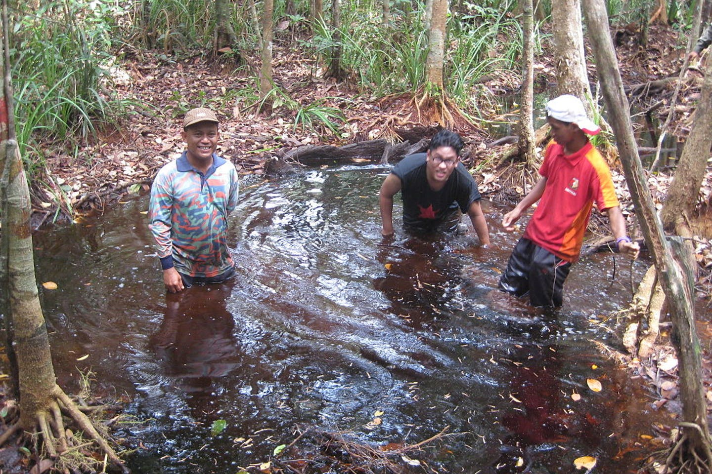 peat swamp forest