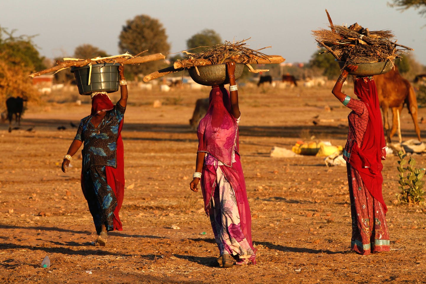 Indian women carrying firewood