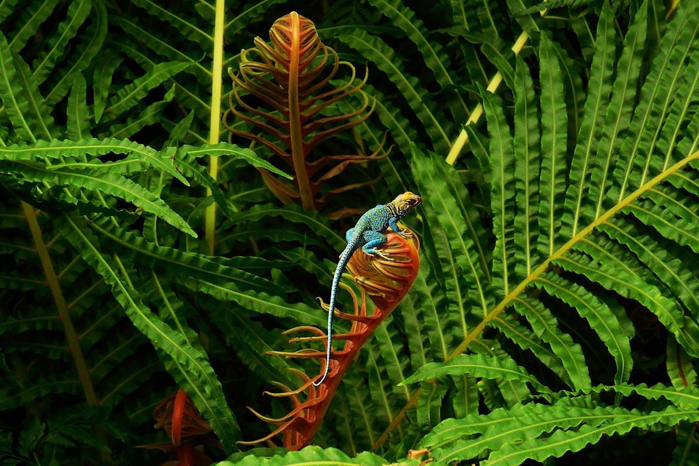 biodiversity in forest