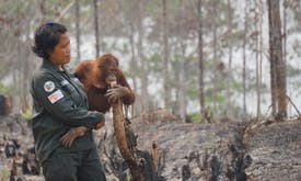 Wildlife feels the heat as Indonesia's carbon bomb explodes