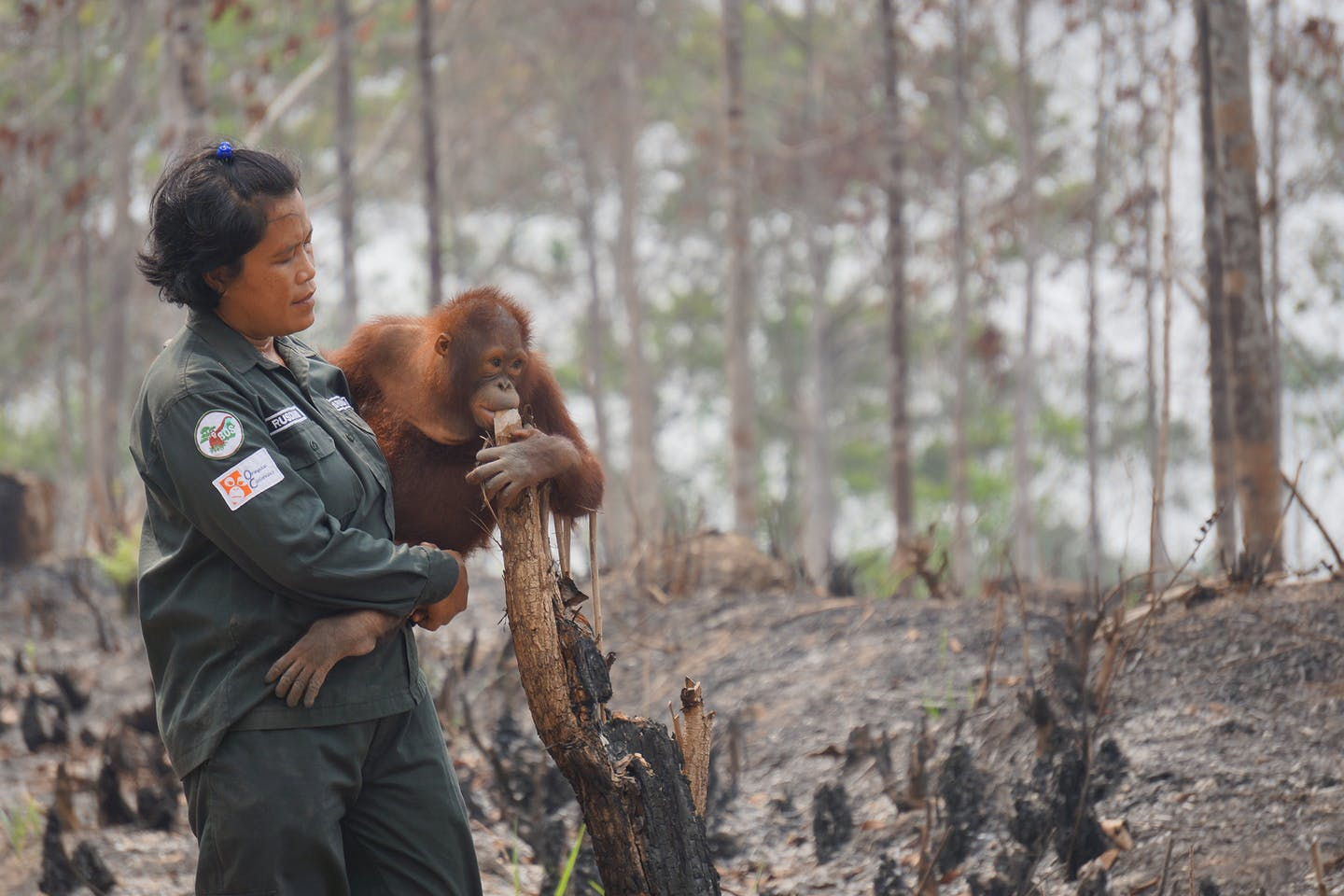 orangutan homes burnt