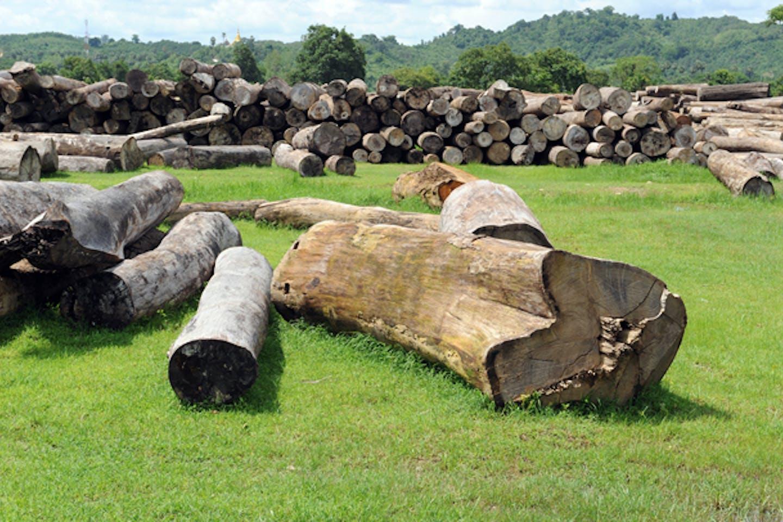 myanmar deforestation timber