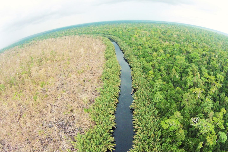 palm oil concession in air hitam laut sumatra