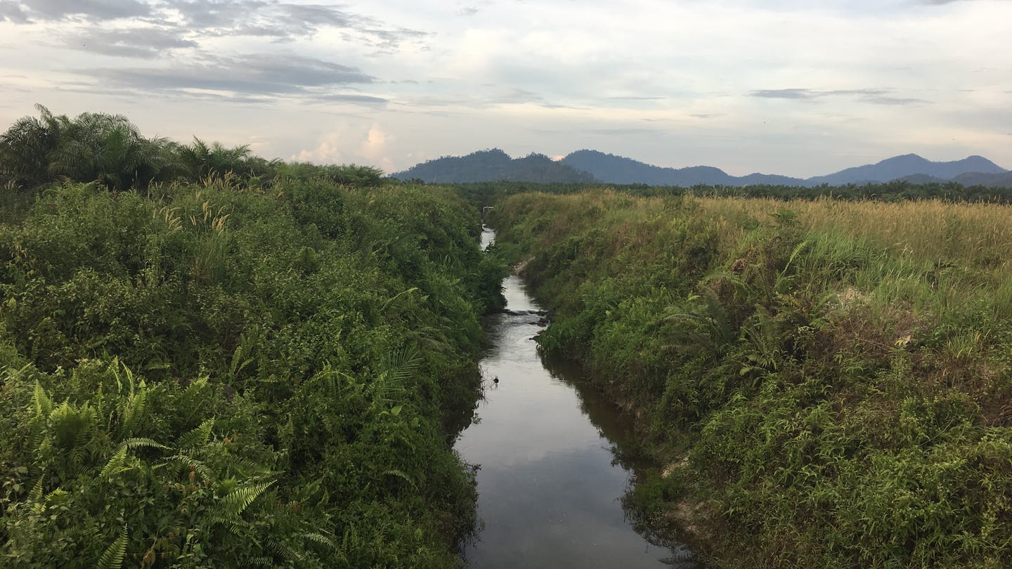 A waterway runs through a palm oil estate owned by Golden Agri Resources. Water is critical to restoring peat forests burned in the fires of 2015