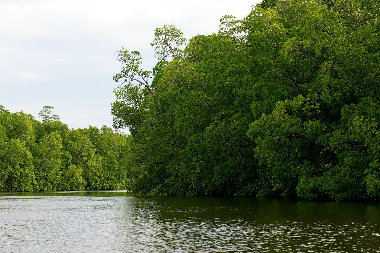 cifor mangroves papua