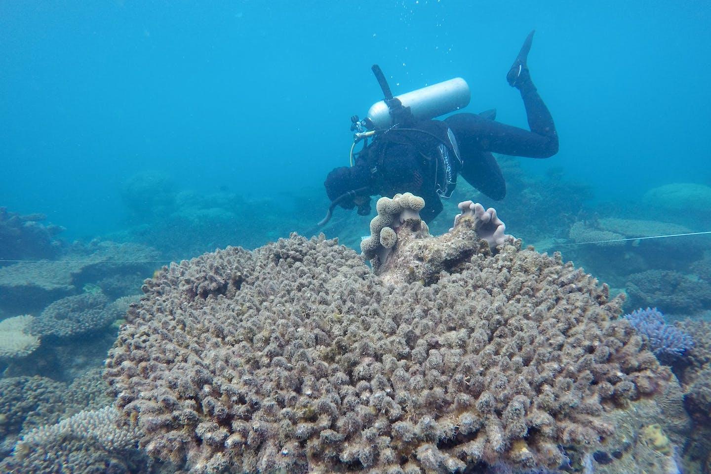 dead corals at Zenith Reef