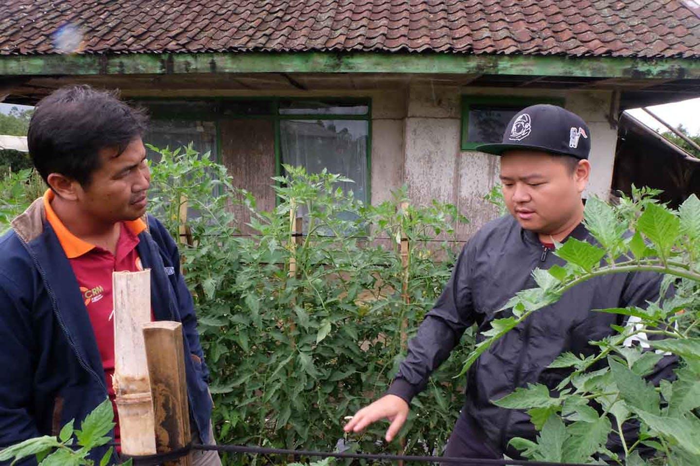 smallholder farming