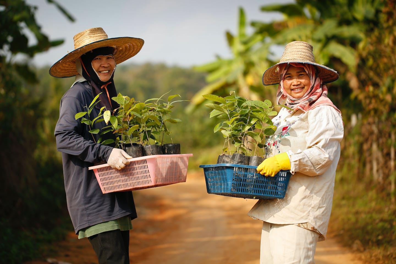 Accor Dhamma Raksha agroforestry