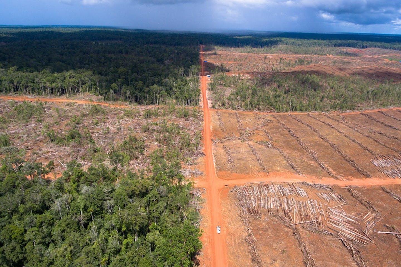 PT PAL deforestation