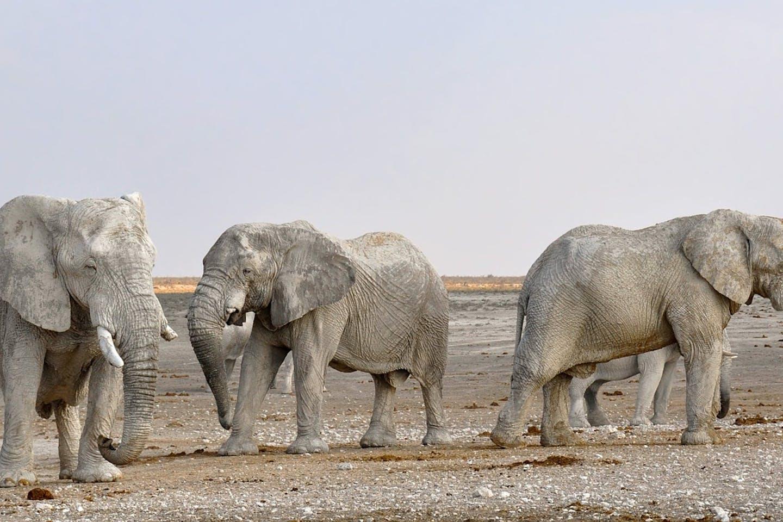 elephants namibia pixabay