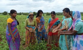 Indian climate-resilient farming model wins Equator Prize