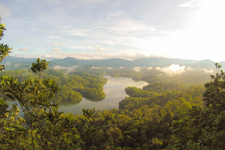 Rainforest, Balok, Malaysia