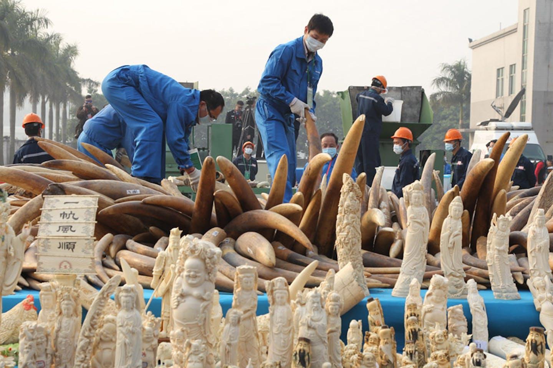 China first public destruction of seized ivory