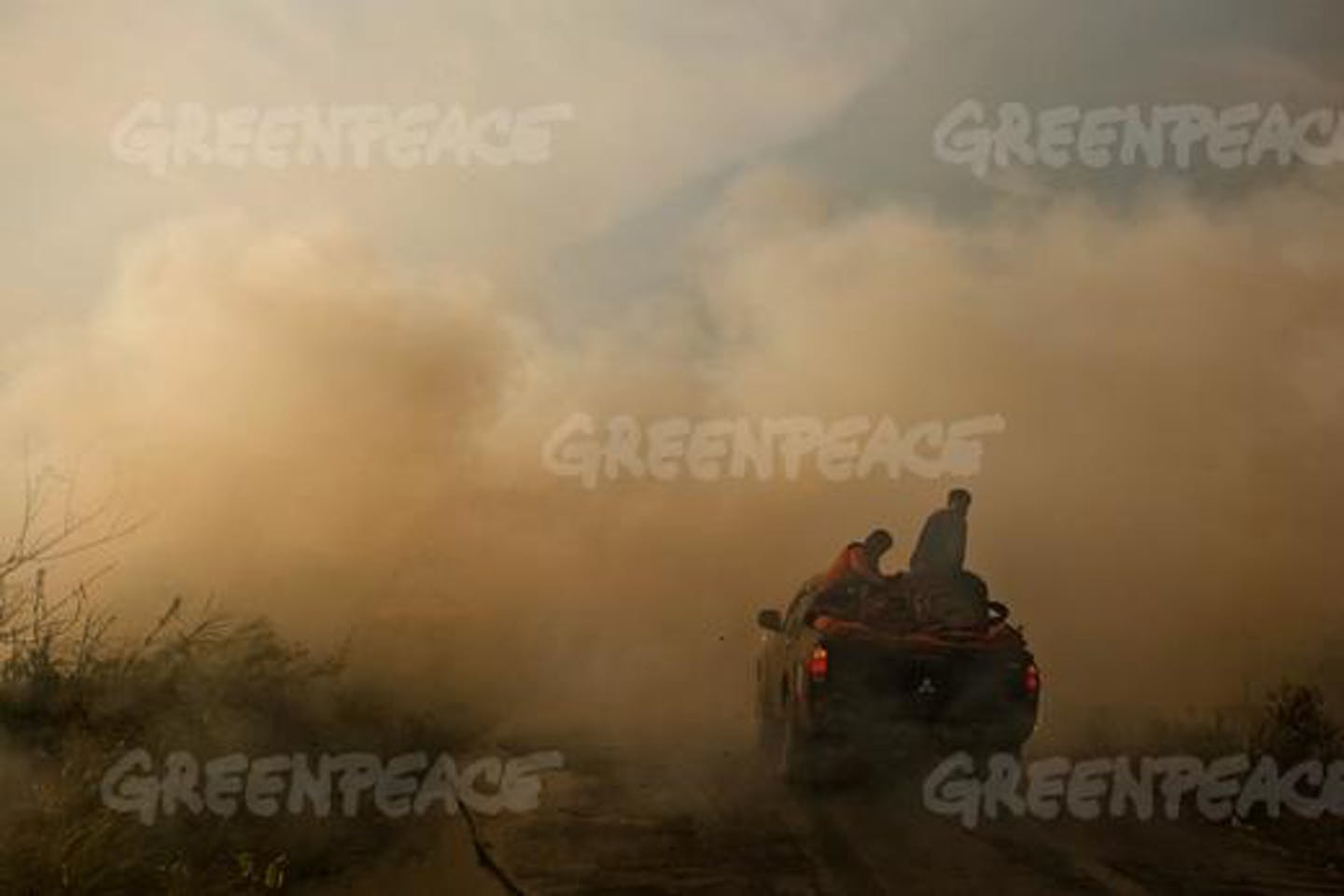 Greenpeace Indonesia forest fire
