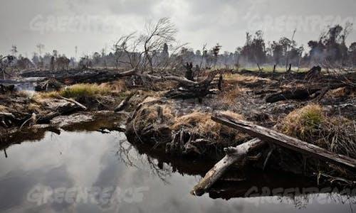 Palm oil industry key culprit behind deforestation, haze in Indonesia