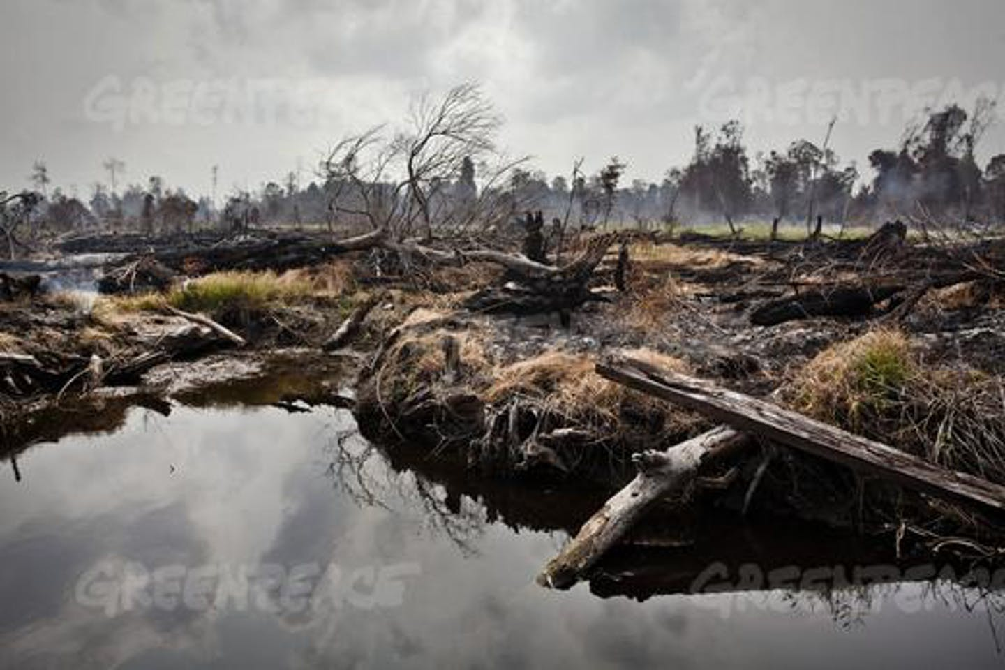 Deforestation by palm oil