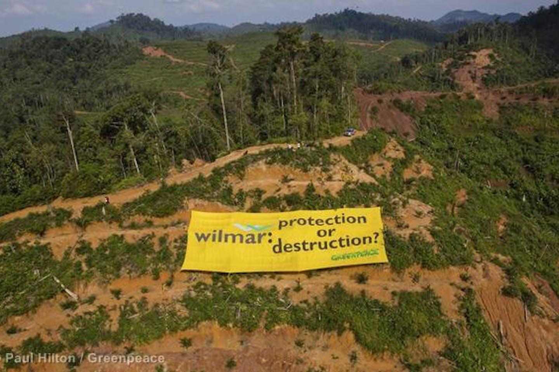 greenpeace wilmar