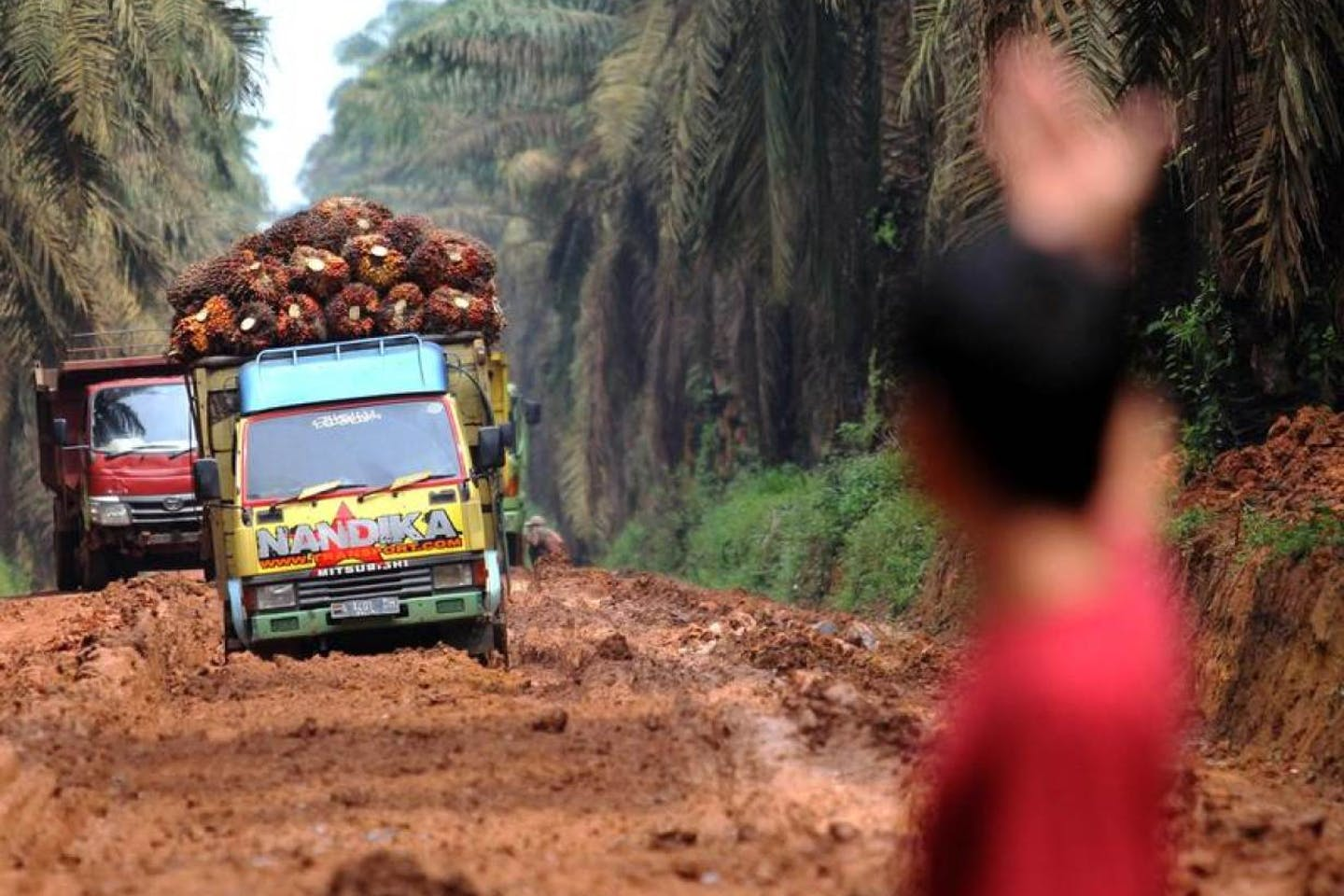 Man assists trucks carrying palm oil fruit