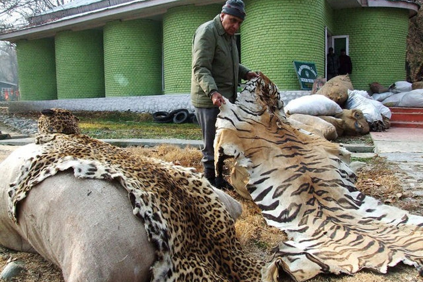 Illegal wildlife products, Kashmir, India