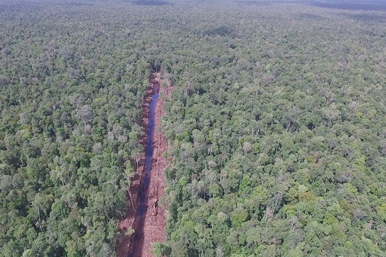 canal dug through Sungai Putri forest