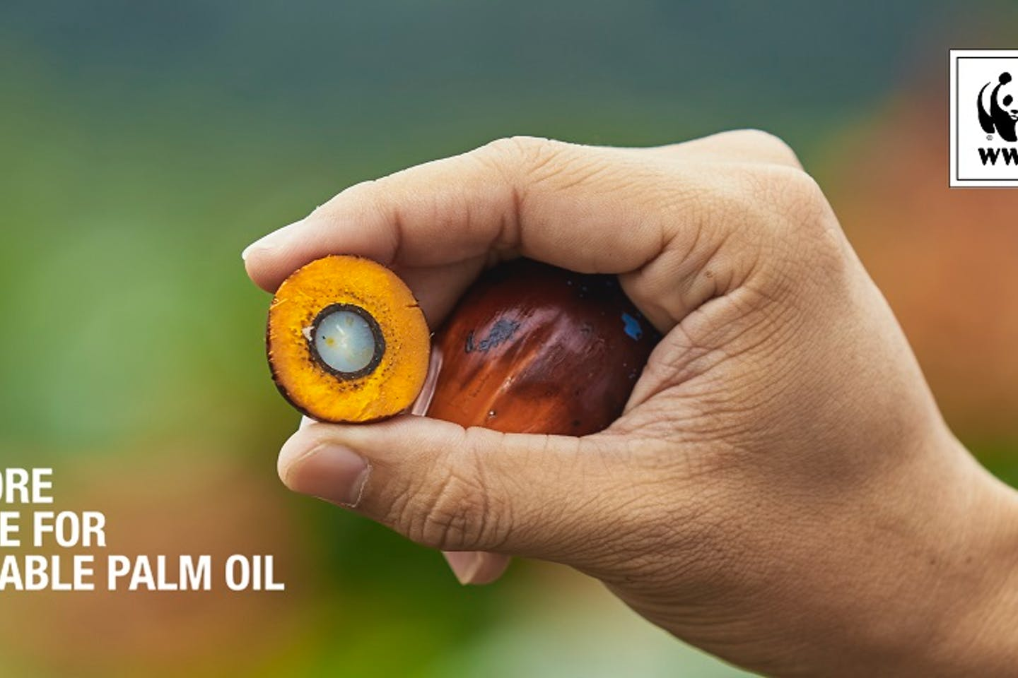 WWF Singapore Alliance on sustainable palm oil