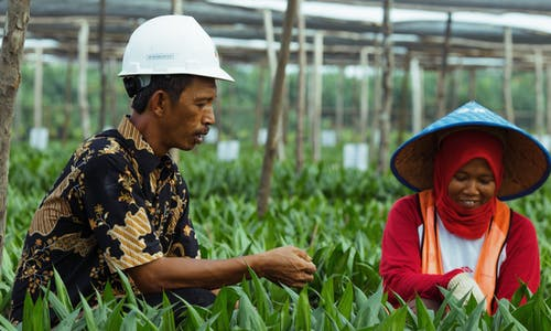 How do smallholder farmers benefit from sustainable agriculture?