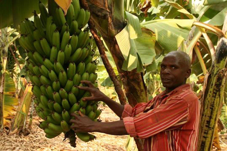 Banana farmers in Rwanda