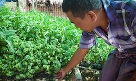 Water-saving tech, veg gardens grow hope in Myanmar's Dry Zone