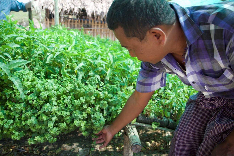 farmer in dry zone myanmar