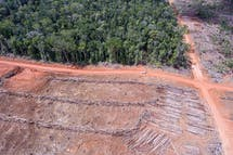 FSC expels palm oil giant Korindo amid rights, environmental issues in Papua