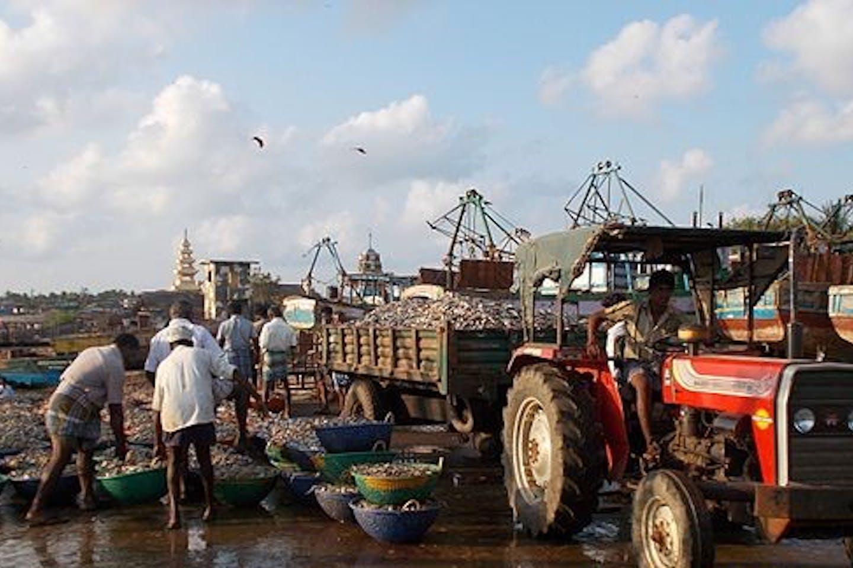 sardine fishing