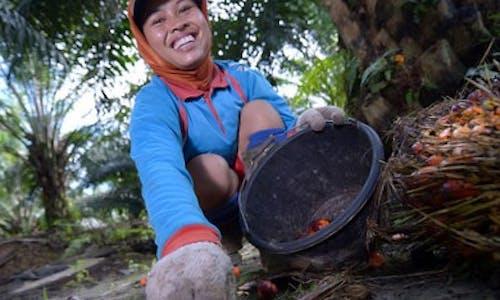 Women in palm oil: invisible no more?