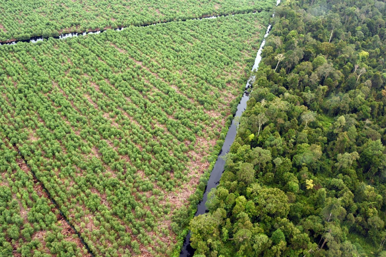 forest-plantation boundary APP perawang