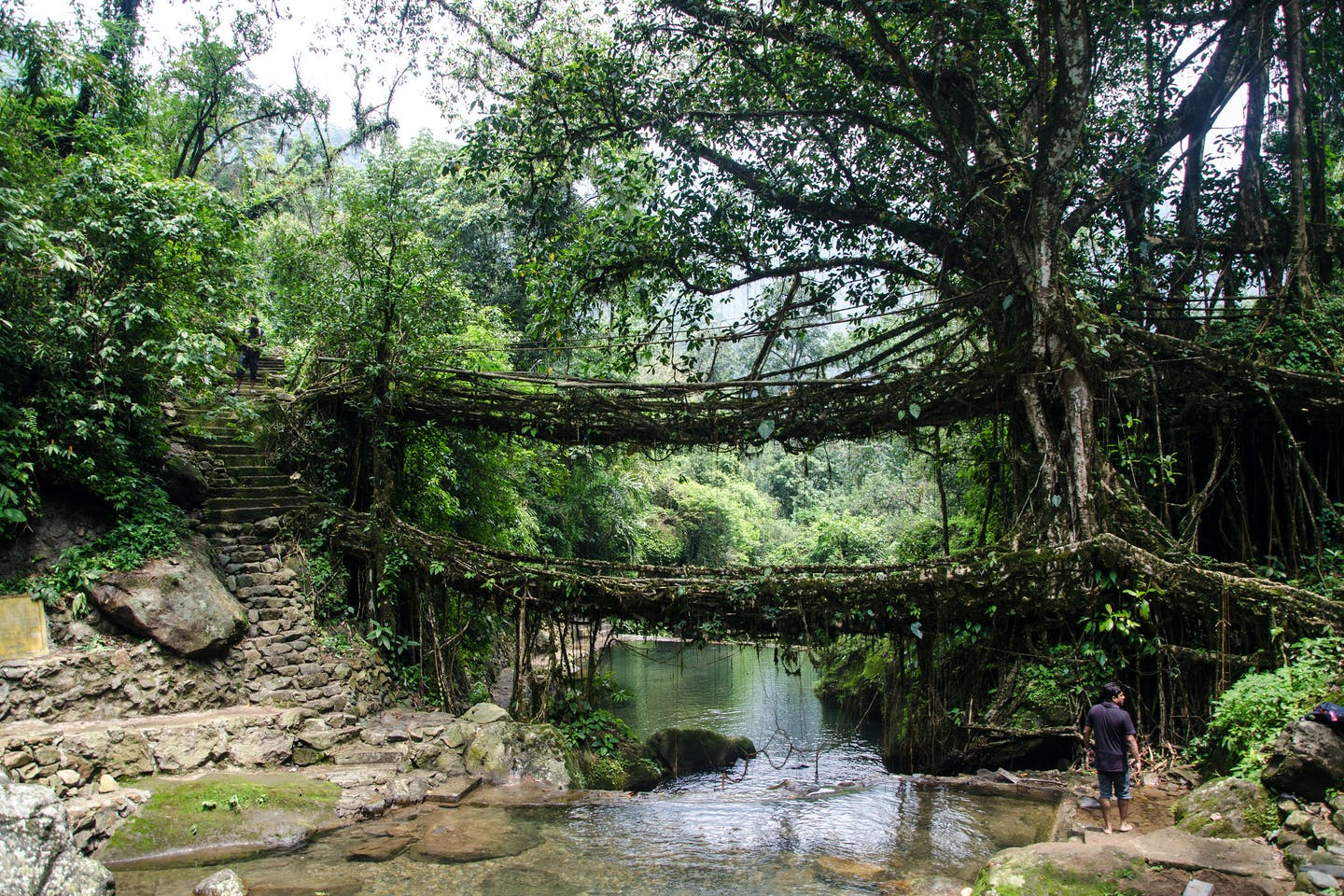 meghalaya root bridge green infrastructure