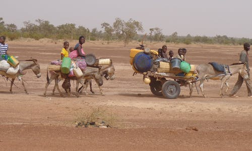Climate now biggest driver of migration, study finds