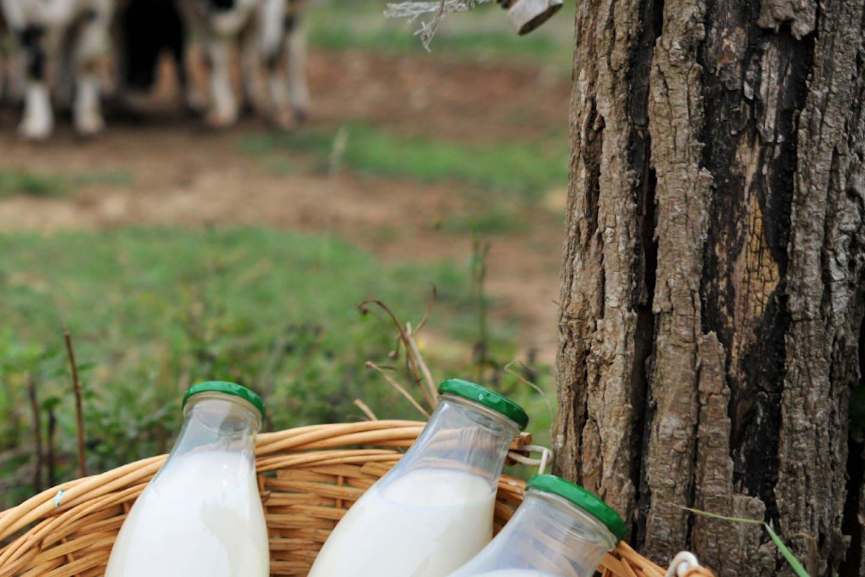 Milk advertisement