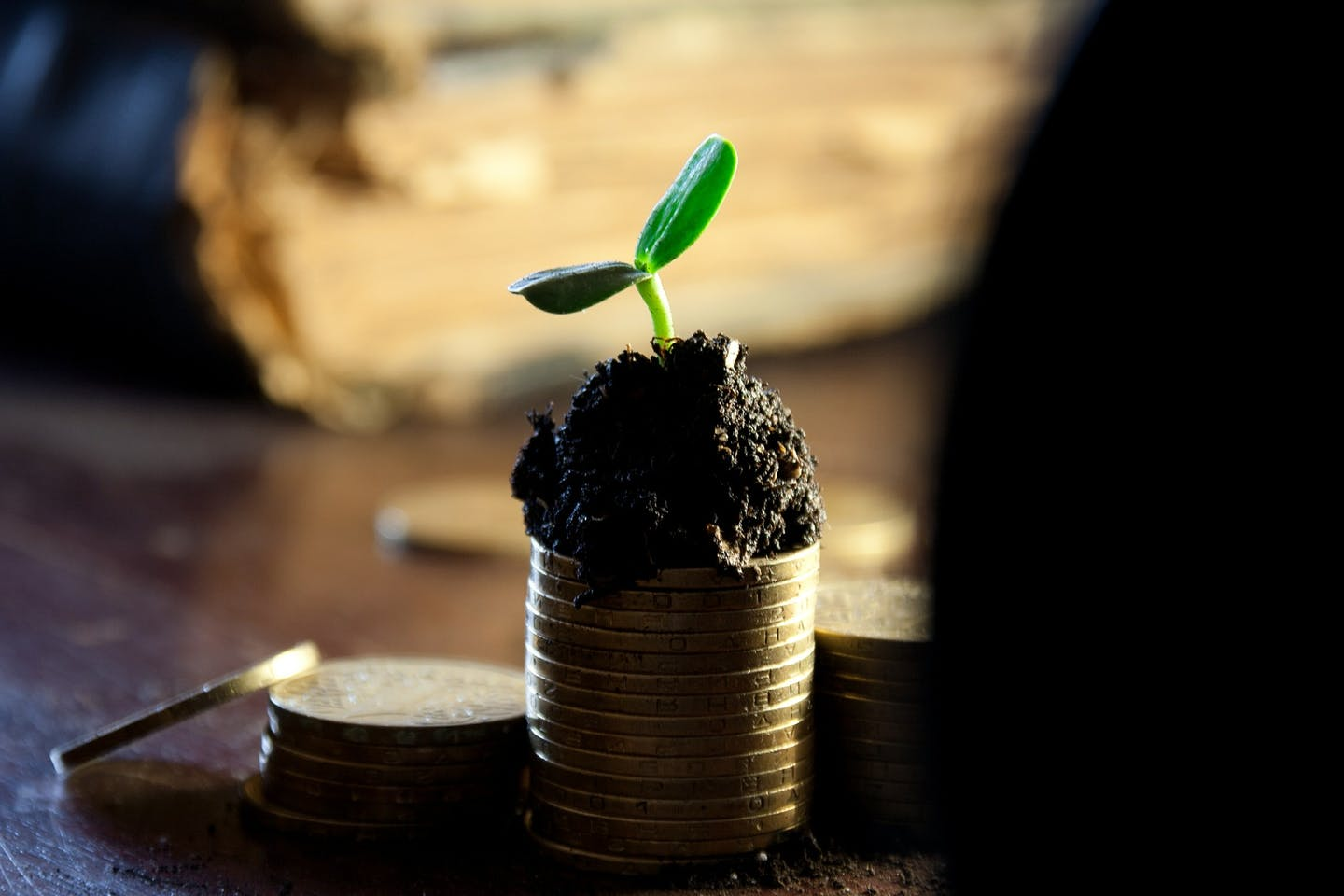 Little sprout growing on top of a pile of coins