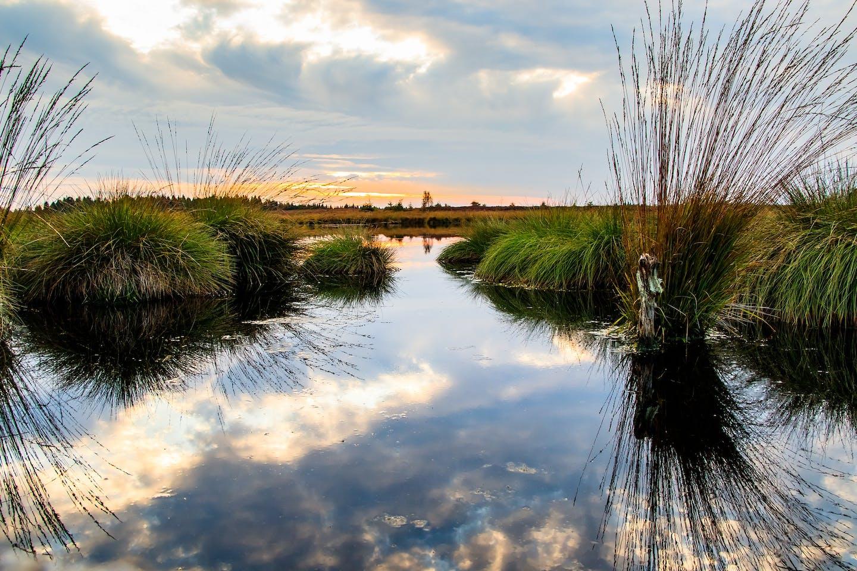 Moor swamp land