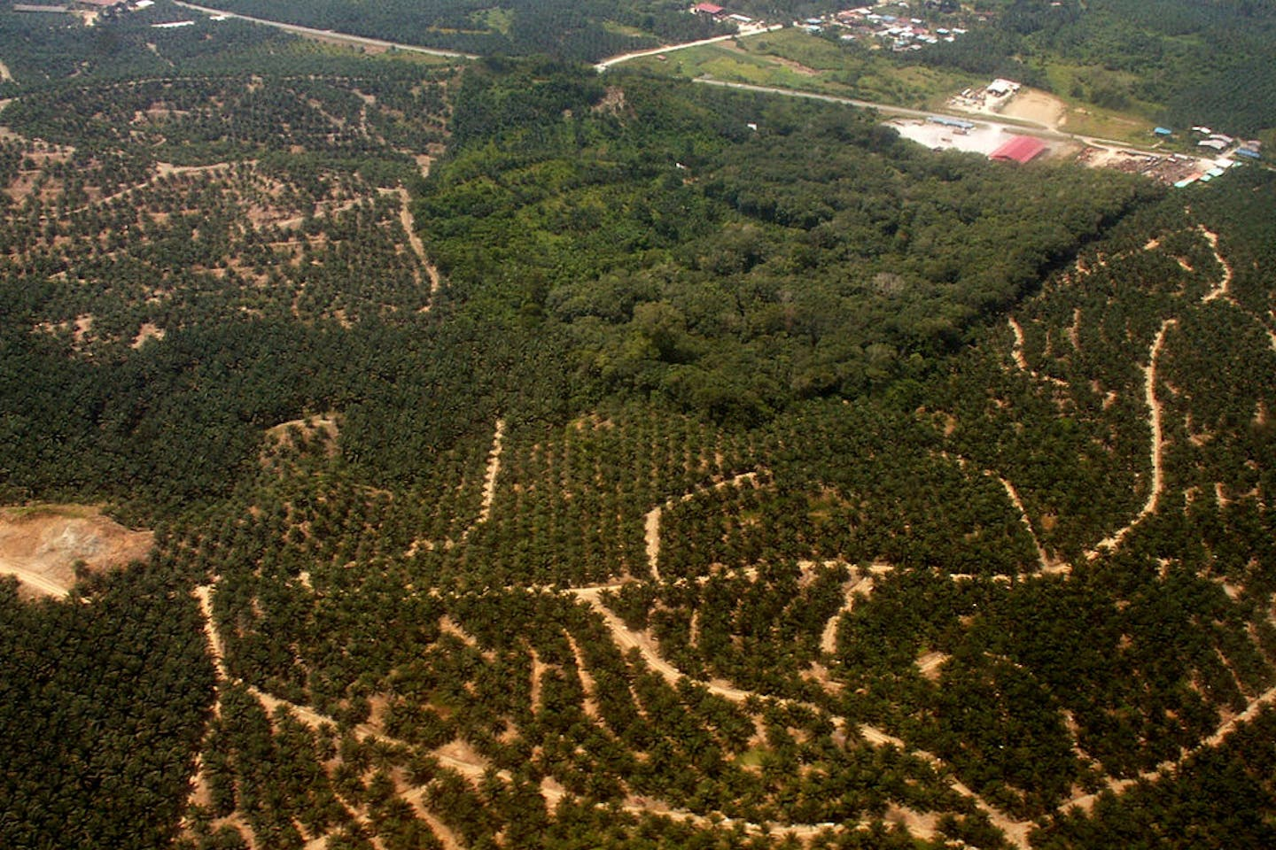 palm oil borneo deforestation