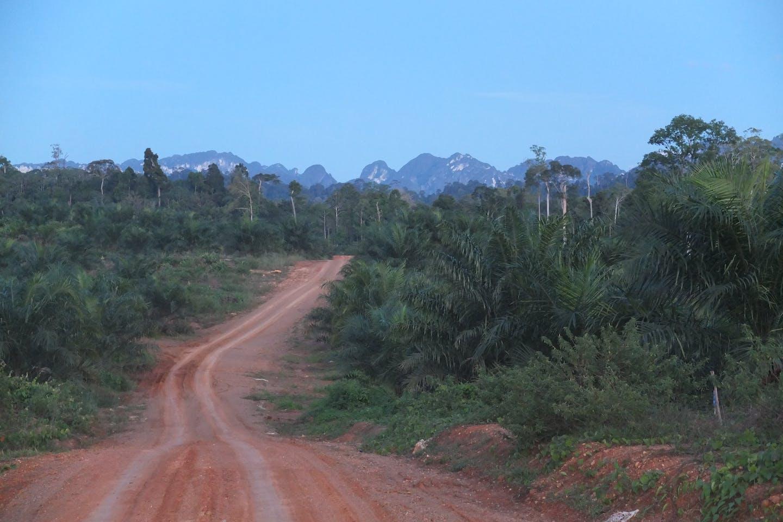 TNC photo palm oil plantation in Berau
