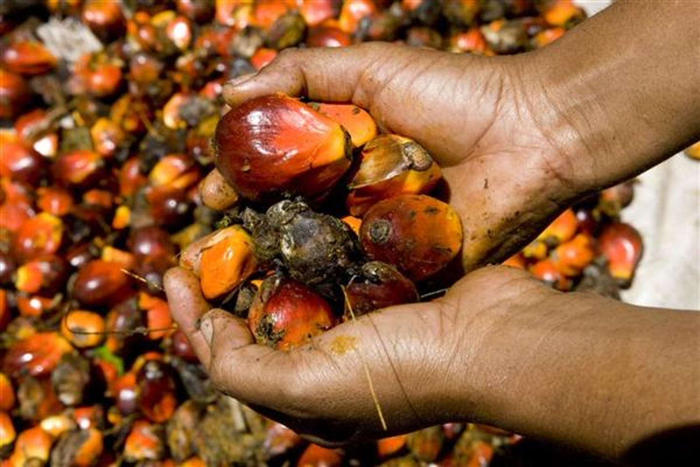 L'Oreal and sustainable palm oil