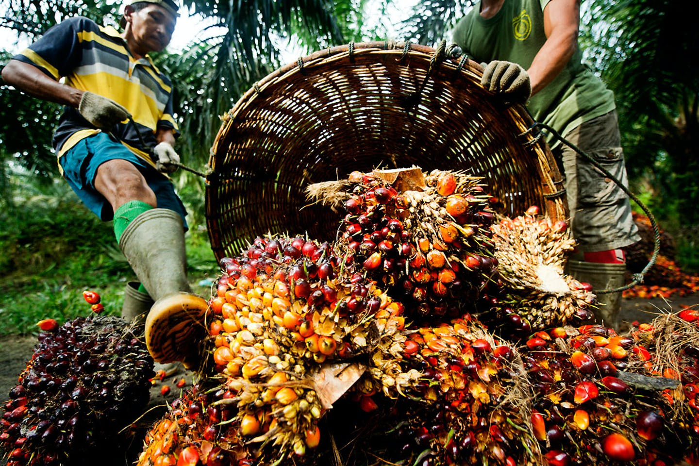 Future of palm oil with RSPO