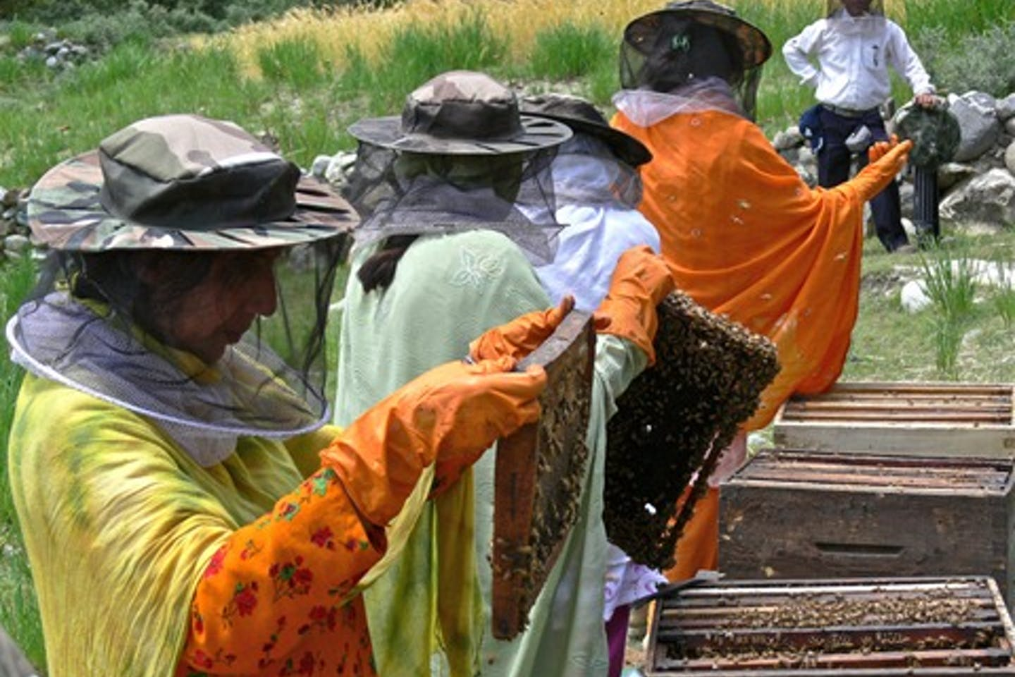 pakistan bee farming