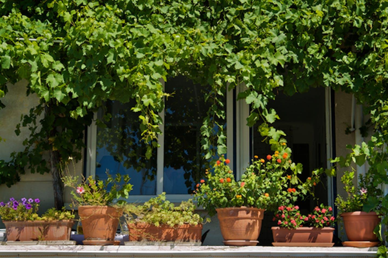 plants in pots balcony